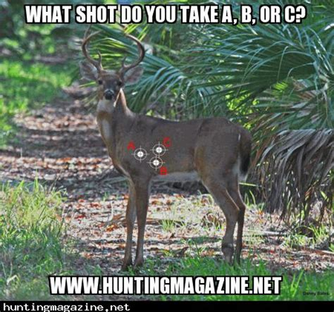 Deer Hunting Meme - where would you shoot this deer hunting meme memes pinterest deer hunting deer and meme