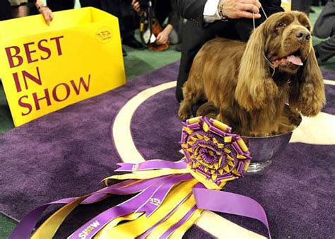 stump   year  sussex spaniel named   show