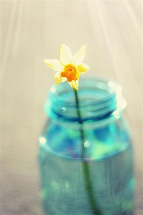 buttercup photography flower in a mason jar daffodil photography aqua blue yellow wall art