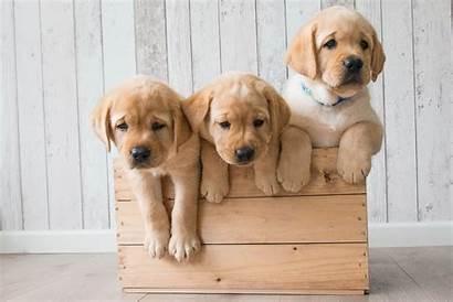 Puppies Galaxy Samsung