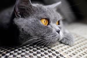 Site De Discussion : le sommeil chez le chat comment mon chat dort il wikichat ~ Medecine-chirurgie-esthetiques.com Avis de Voitures
