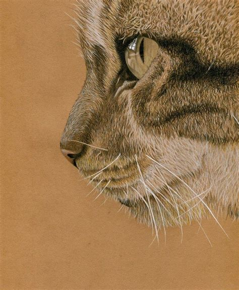 coloured pencil drawing tutorial molly  cat clare