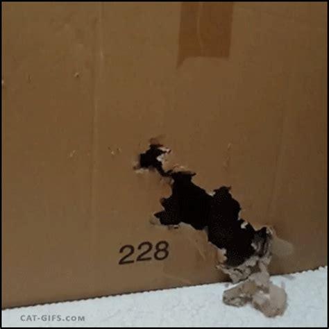 carton petit chat  de chats