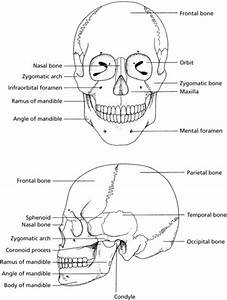 Oral Dental Anatomy