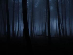 pine forest fog by AVENGED7X on DeviantArt