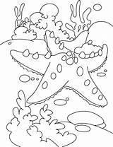 Starfish Coloring Pages Fish Star Sea Under Print Colour Outline Adult Hard Rest Coral Info Colors Bass Realistic sketch template