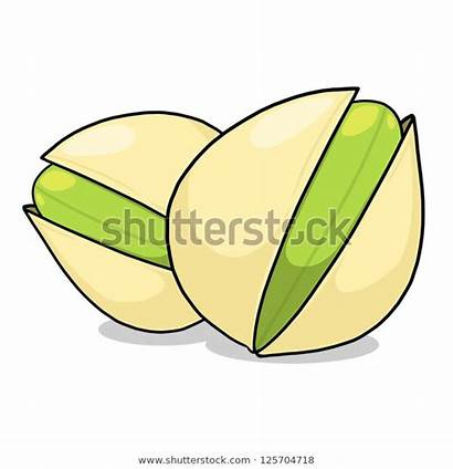 Pistachio Cartoon Nuts Tree Footage Vectors Illustrations