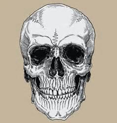 Sketchy Skull With Cap Bandanna Royalty Free Vector