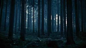 Dark, Forest