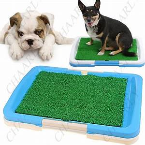 1000 images about indoor grass for dogs on pinterest With dog bathroom training