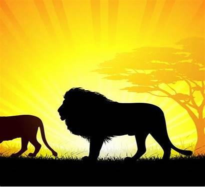 Lion Running Clip Illustrations Lions Vector Illustration