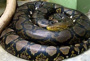 World biggest snake - Zestinfo