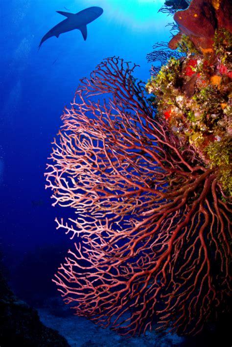 coral tumblr