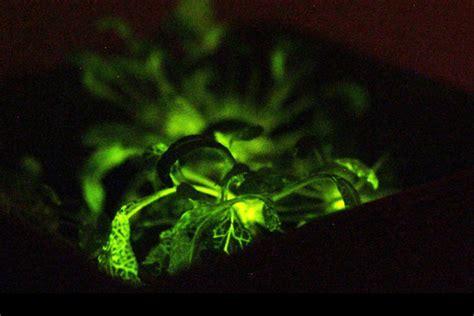 ready  glow   dark trees