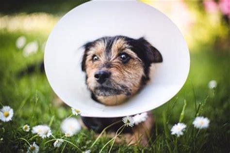 wie halte ich meinen hund gesund  erkennen sie fieber
