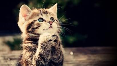 Cat Kittens Animals Feline Wallpapers Cats Desktop