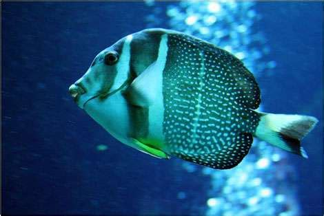 escapade aquarium de gilles