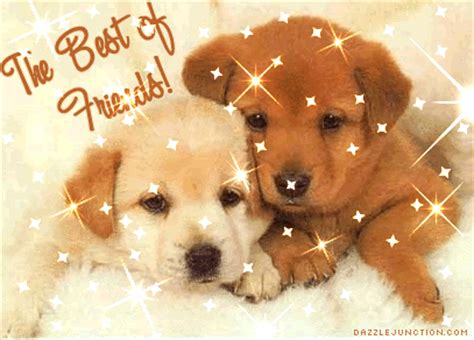 Best Friends Animal Animals Images Graphics Pictures For Page 13