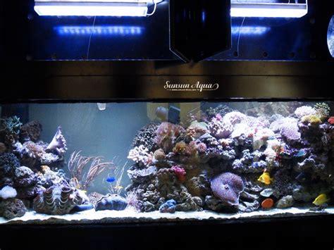 tank photos with orphek pr 156 aquarium led