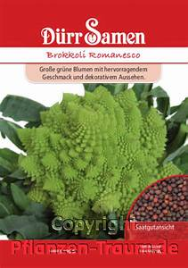 Paprika Gute Nachbarn : brokkoli romanesco brassica oleracea samen d rr pflanzen ~ Frokenaadalensverden.com Haus und Dekorationen