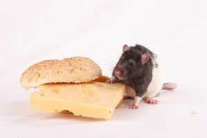 Comment Tuer Un Rat : comment tuer un rat avec peanut butter maison et jardin ~ Mglfilm.com Idées de Décoration