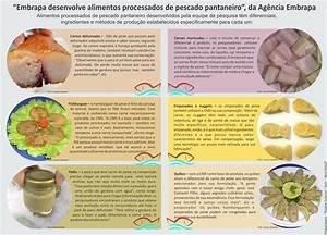 Cientistas Desenvolvem Alimentos Processados De Pescado