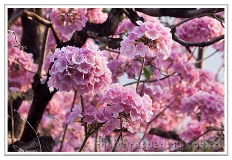 ดอกไม้สีชมพูแสนสวย