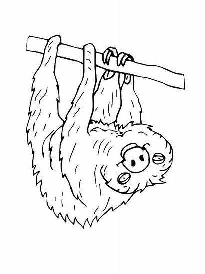 Sloth Coloring Pages Hanging Upside Endangered Down