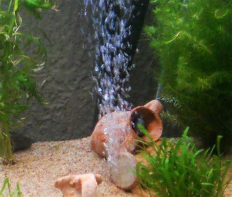 utilit 233 du bulleur pour un aquarium