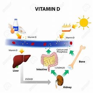 Vitamin D Dosis Berechnen : hoge dosis vitamine d3 naast chemo bij darmkanker geeft langere ziekteprogressie vrije tijd en ~ Themetempest.com Abrechnung