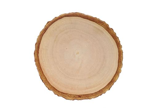 wood slice rustic wood coasters wood slice coasters tree bark slice tree slices wood slice coasters