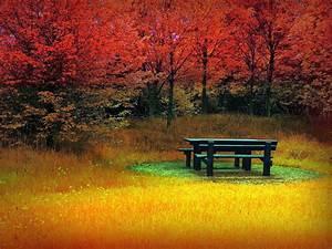 Beautiful Autumn Wallpapers - WallpaperSafari