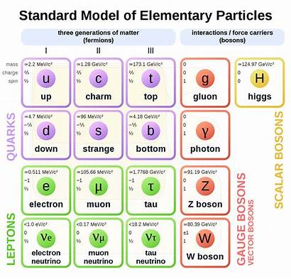 Standard Particles Physics Level Elementary Diagram Svg