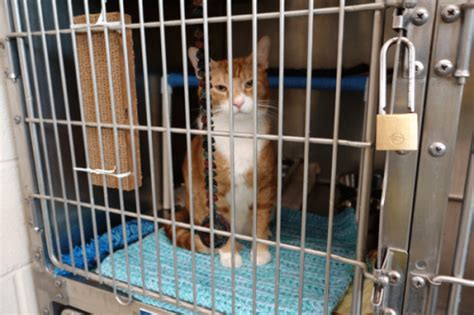 snuggles project warms cages  shelter animals