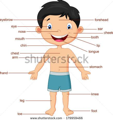 Cartoon Body Parts Stock Images, Royaltyfree Images & Vectors Shutterstock
