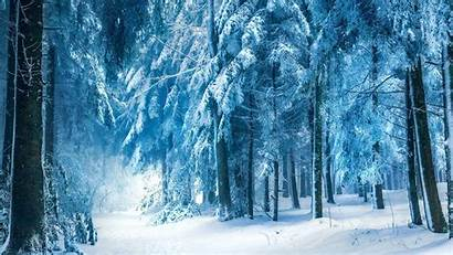 Forest Snow Snowy Dark Wallpapers