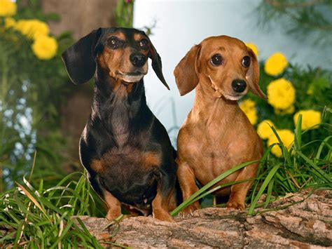 Top 10 Dog Breeds In The World The Cozy Pet Blog