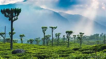 Sri Lanka Tea Wallpapers Nature Plantations Sunrise
