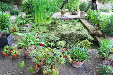 water garden plants moisture loving plants for areas learn about water