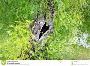 Baum Mit H : baum stamm mit einer herz geformten h hle stockbild bild von befestigt geliebte 62155011 ~ A.2002-acura-tl-radio.info Haus und Dekorationen