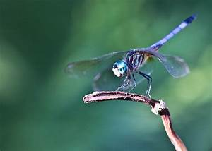 The Smile of a Dragonfly [Photos] | This Is The Story Of...