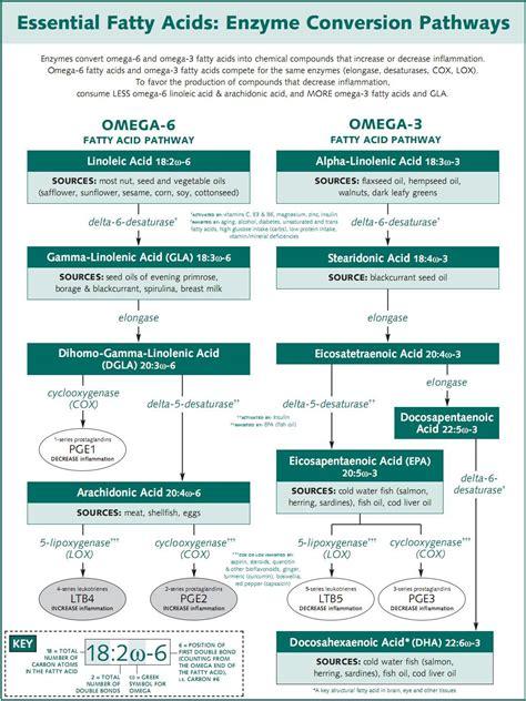 omega   omega  pathways semester  mini    holistic nutrition autism