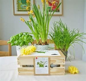Bett Für Den Garten : fr hlingsdeko und kr utergarten ~ Frokenaadalensverden.com Haus und Dekorationen