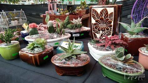 tanaman hias pot keramik kombinasi apik cantik