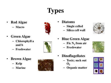 Biodiesel Production From Micro-algae