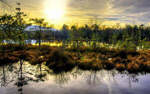 1920x1200 Lovely Swamp Trees Sunshine desktop PC and Mac ...