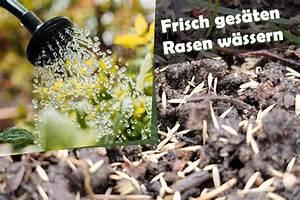 Alpenveilchen Gießen Wie Oft : frisch ges ten rasen w ssern wie oft rasensamen gie en ~ A.2002-acura-tl-radio.info Haus und Dekorationen