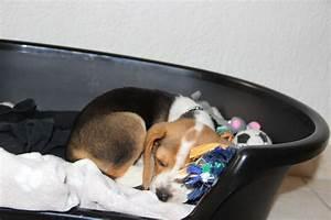 Video Pour Chien : panier plastique noir pour chien cosy air panier et corbeille ~ Medecine-chirurgie-esthetiques.com Avis de Voitures