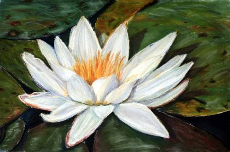 water lily original small pastel flower painting