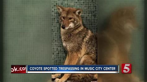 Coyote Wanders Into Music City Center Bathroom
